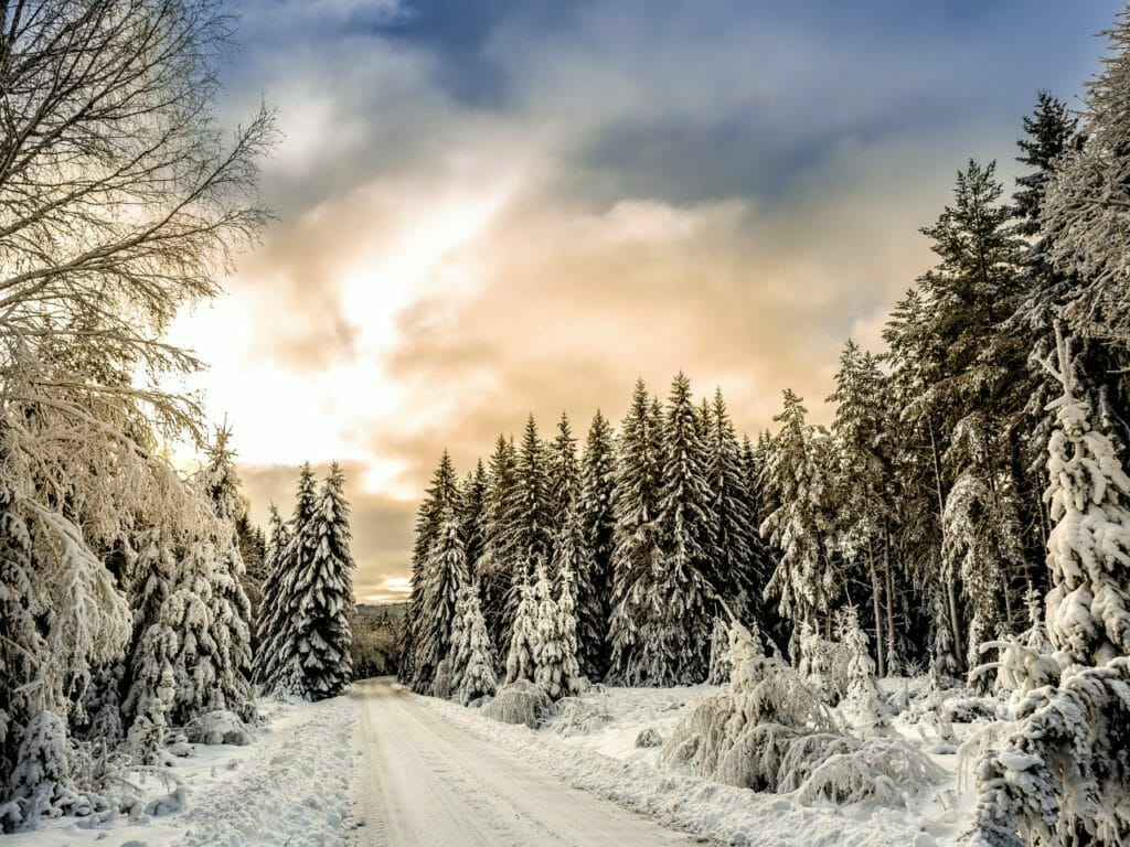 Vivaldi's Four Seasons Winter. A road in between trees covered in snow