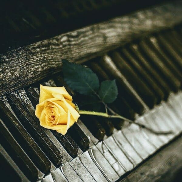 Yellow rose on old piano